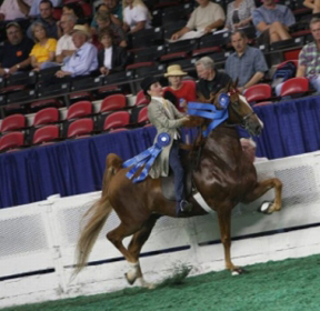 American Saddlebred's Biggest Stage Crowns New and Repeat World's Grand Champions