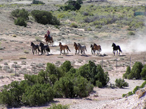 BLM Doesn't Accept EWA Conclusions About Board Member