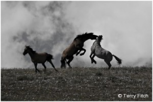 Horseback Chief Photographer Terry Fitch Wins People Choice Two Years Running