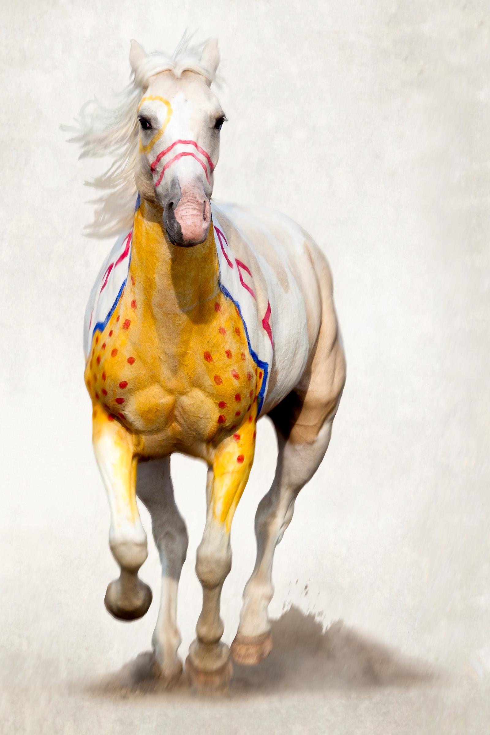 Native American Indian Horses
