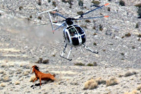 AAEP Issues Wild Horse Report and Guidelines – Tells Choppers to Back Off