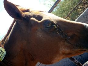 PHOTO CREDIT: horsebackmagazine.com