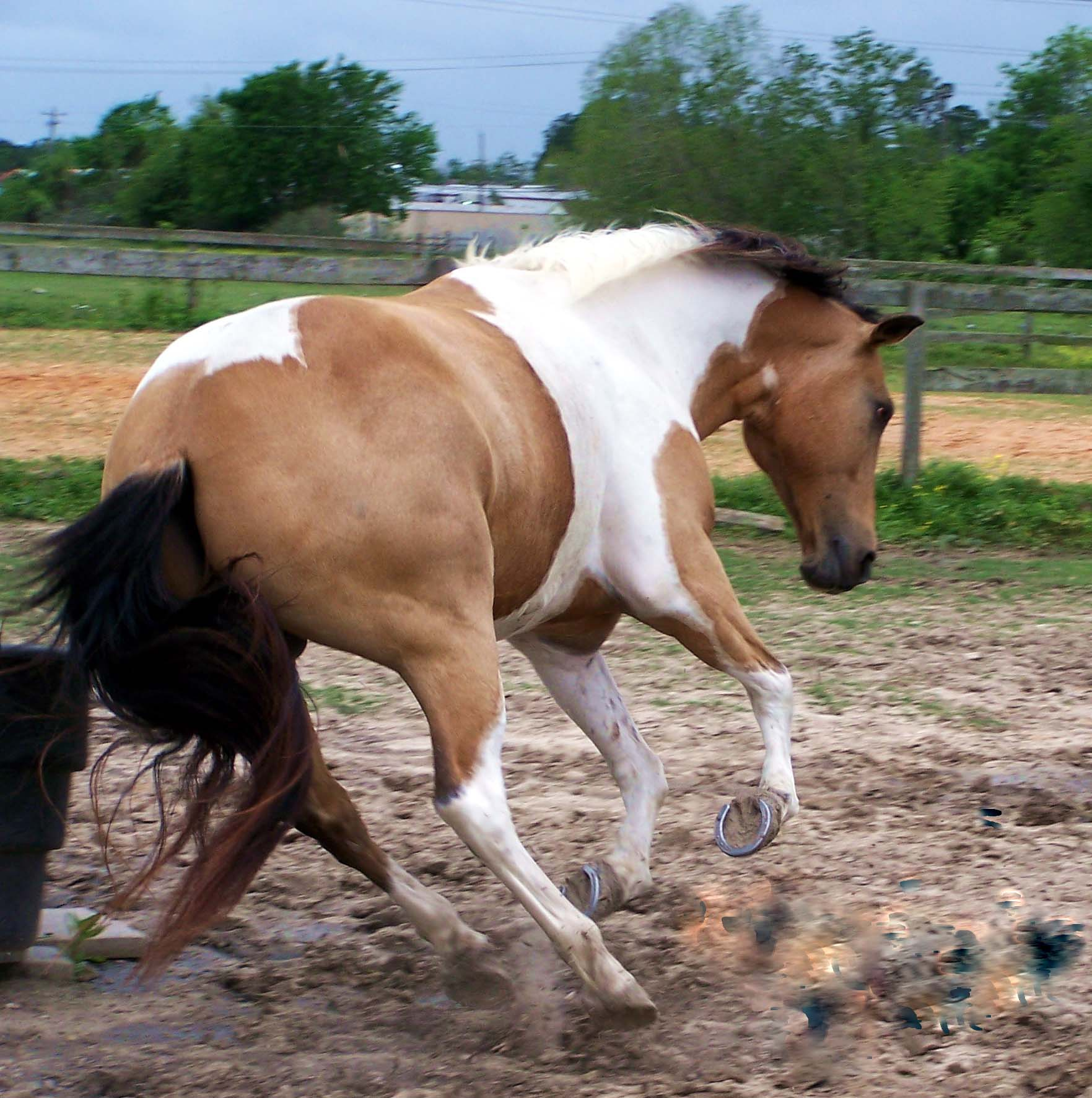 Horse With Rabies