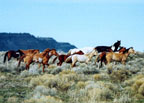 The Wild Horse Symposium:  Humane Management of Wild Horses through Immunocontraception