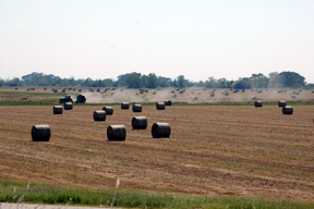 Good News For Hay Production in (Formerly) Partched Texas