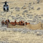 "BLM Nevada Accepting Written Comments about the Use of Helicopters and Motorized Vehicles on Wild Horse ""Gathers"""