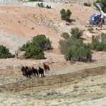 Seidlitz Cites Drought as Justification for Wild Horse Helicopter Stampede – What About Other Wild Animals?