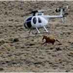 Wild Horse Stampedes Could Be Imminent Facebook Post Says
