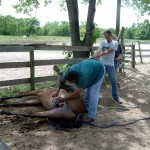 Unwanted Horse Coalition's Operation Gelding Program Closes out the Summer with Four Clinic