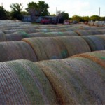 Texas Hay Producers May Not Ship to Parched Midwest