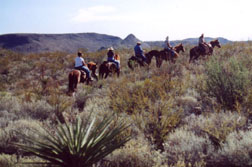 State Selling Big Bend Ranch Horses to Slaughter
