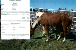 TPWD Releases Photos of Executed Horses