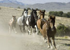 International Conference Launches With Field Trip to Birthplace of  Prehistoric Horses and Visit to Their Dwindling Offspring