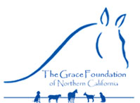 Californias Grace Foundation Rescue Faces Day of Judgement From Banks