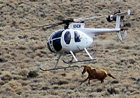 BLM Advisory Board recommends sterilization of wild horse mares