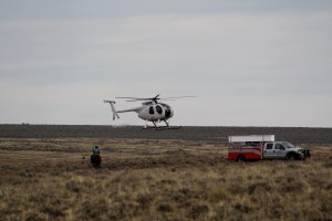 BLM Rids Nevada's Owyhee Area of Pesky Wild Horses, Elko Area's Next
