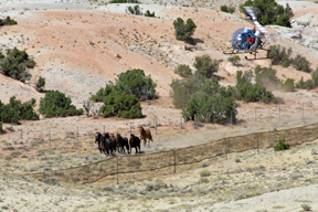 Bureau of Land Management Wild Horse Roundups Lack Oversight, Says Humane Society