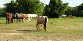 Horse Council Touts Horse Census, Urges Cooperation