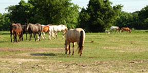 USDA Mandates Traceability Including Horses Despite NAIS Opposition of Years Past