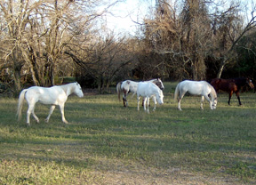 The Humane Society of the United States Forms New Responsible Horse Breeders Council
