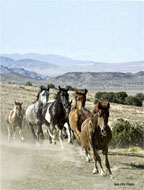 Nevada Wild Horse Protest Set for Today