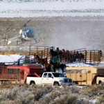 BLM Names Three to Wild Horse Board