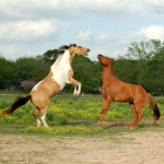 White House Recommends Removal of Horse Slaughter Funding in Proposed 2014 Budget