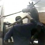 Tennessee Walking Horse Abuse ABC copy