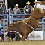 Rodeo Bulls Bullfighter Reno 2