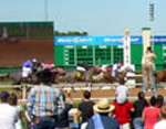 SHRP Finish Line Shot 4 inch 72