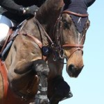 http://www.dreamstime.com/stock-images-close-up-show-jumping-horse-brown-image49311484