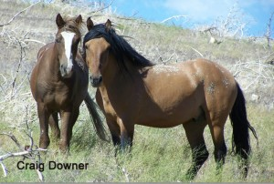 downer-2